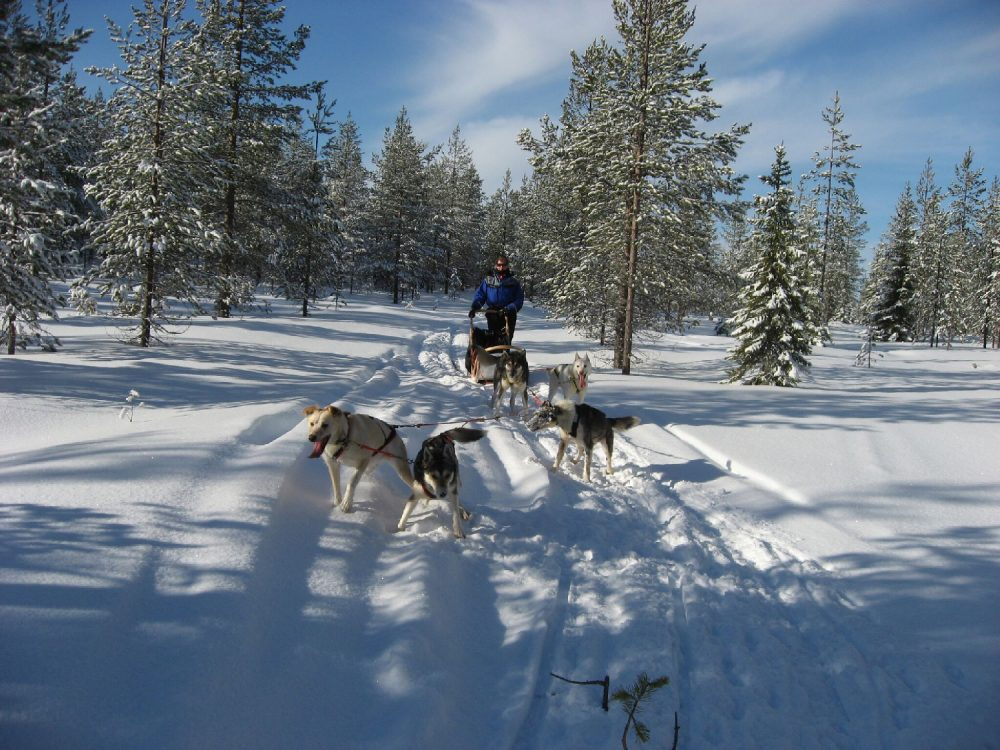 Finland-Husky_GF