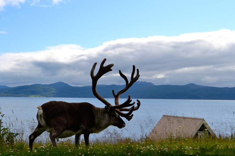 Norvege-Norway-Nord-Landscape7_GF